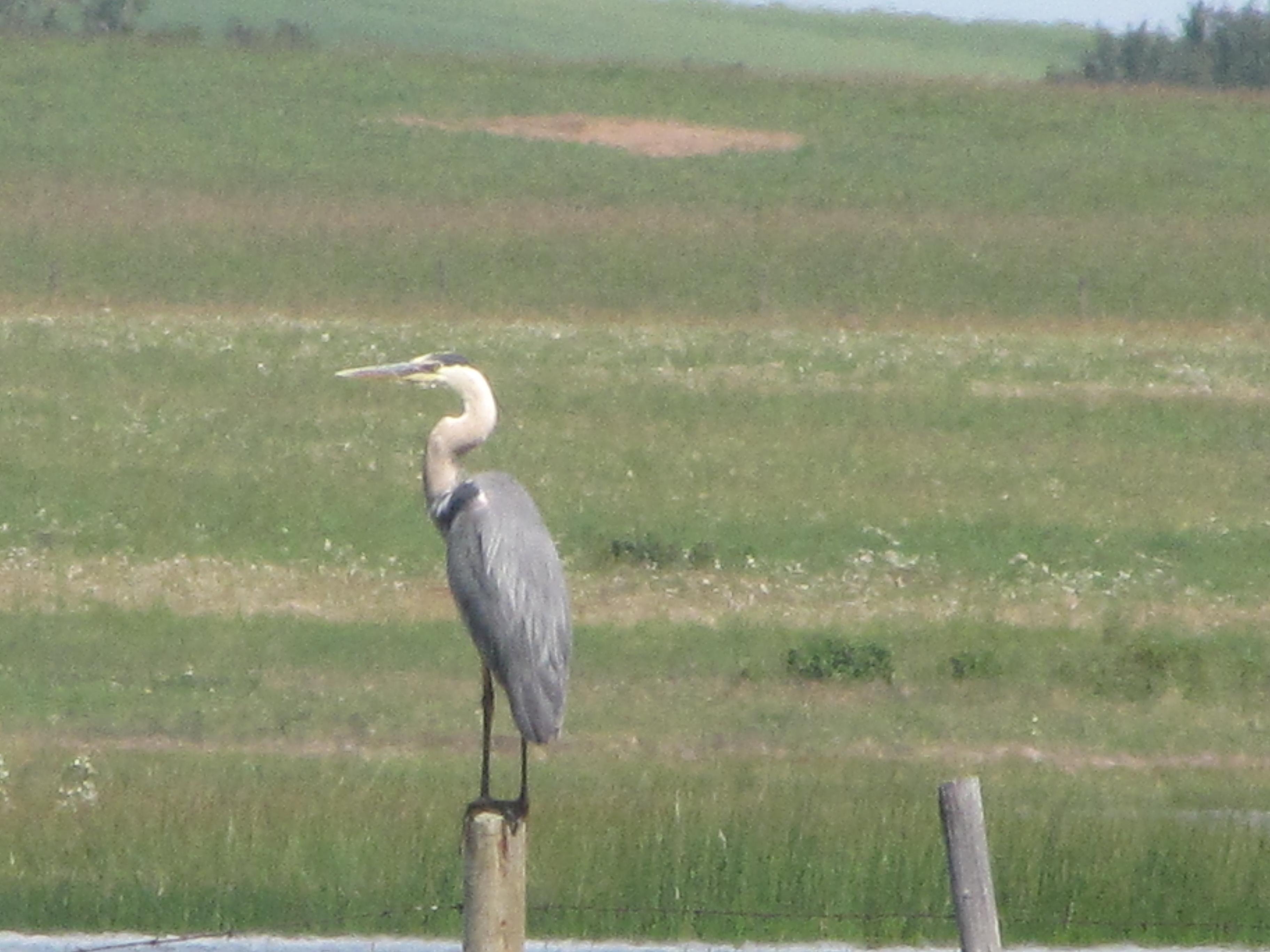 must see birds u2013 prairie birder