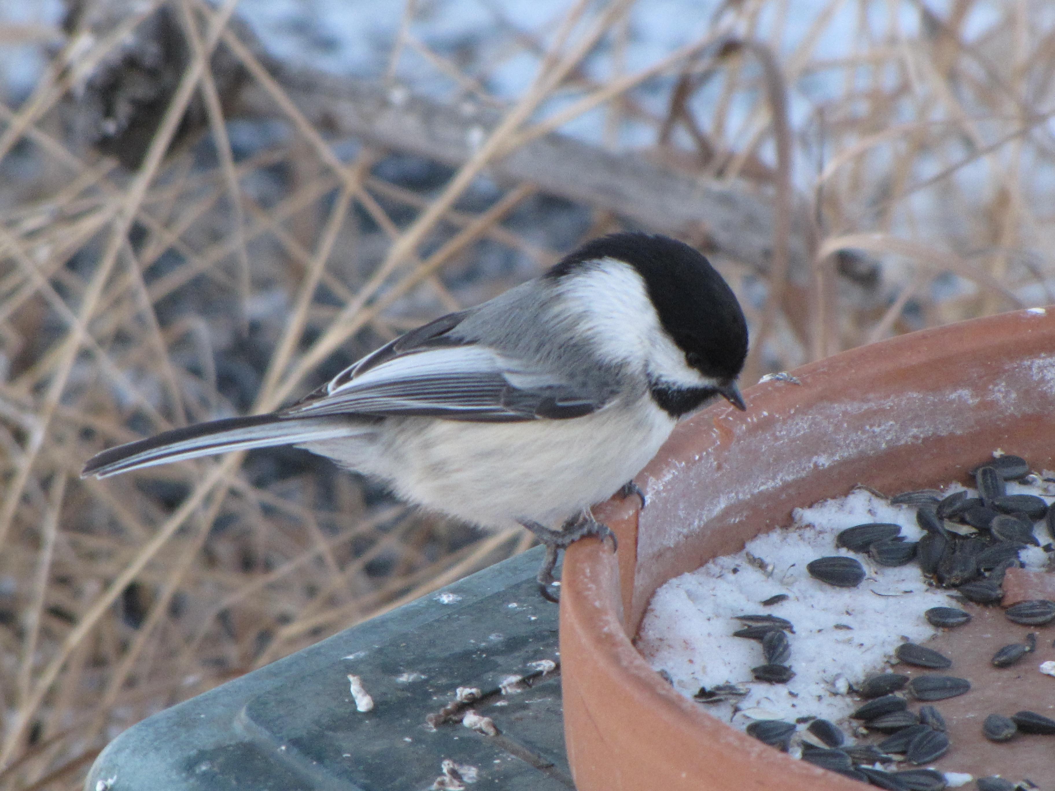 Feeding Birds in the Winter | Prairie Birder