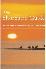 Shorebirdguide
