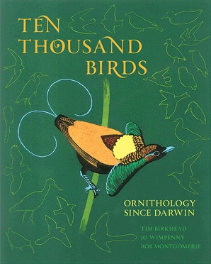 TenThousandBirds