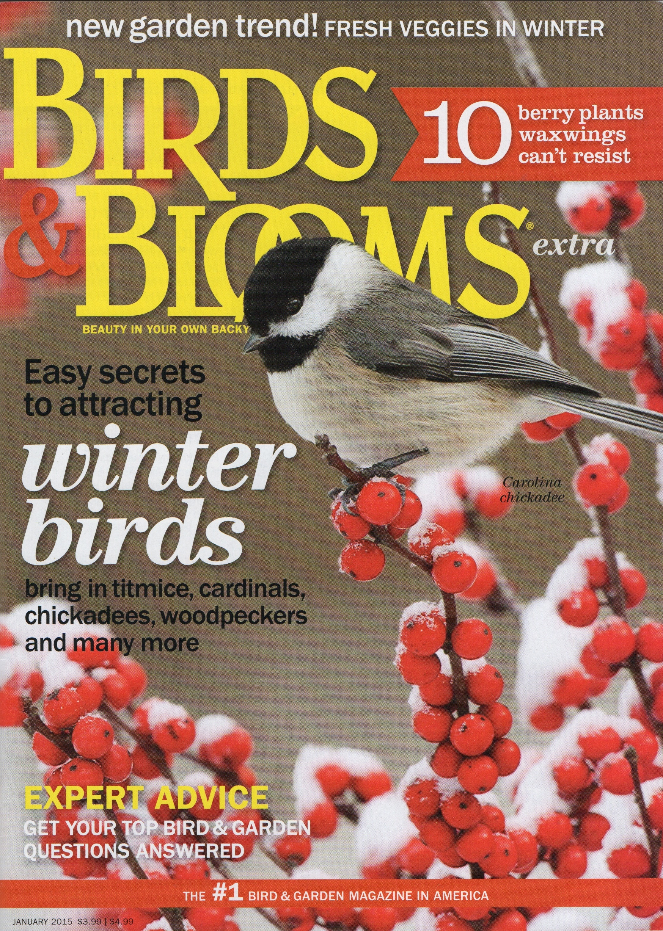 Birds Blooms For The New Year