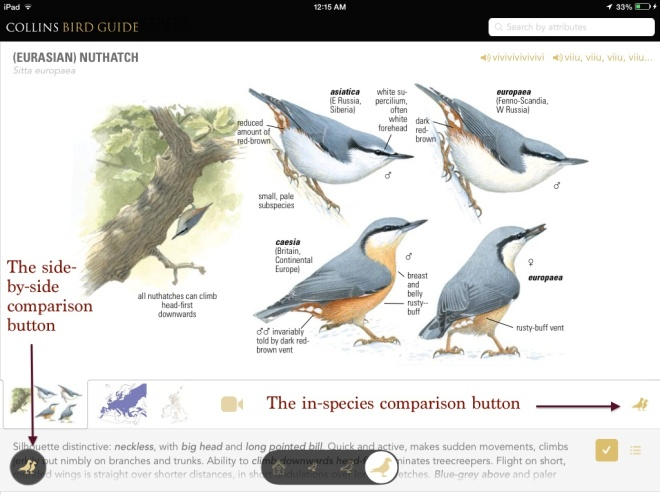 Nuthatchcomparisonimage
