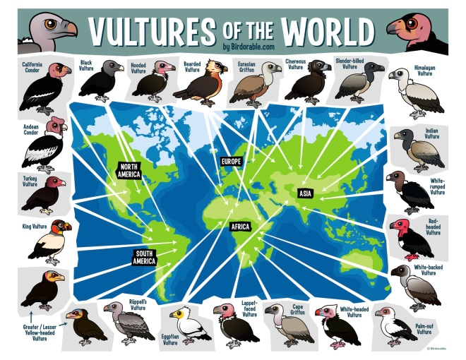 Birdorable-vultures-of-the-world-map.