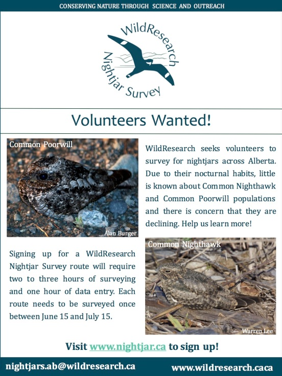 2016 Nightjar Survey poster - letter - AB