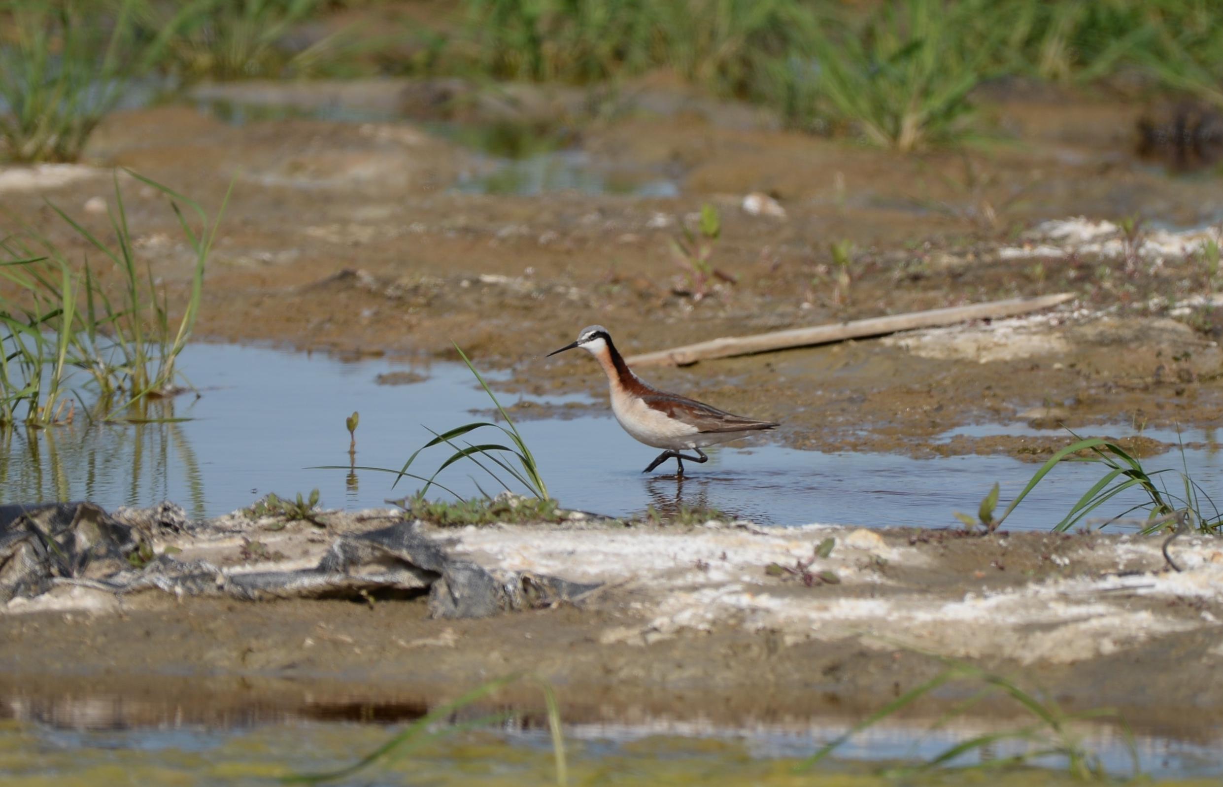 Aves de pasto: Gemas ocultas de la pradera - Aves y floraciones