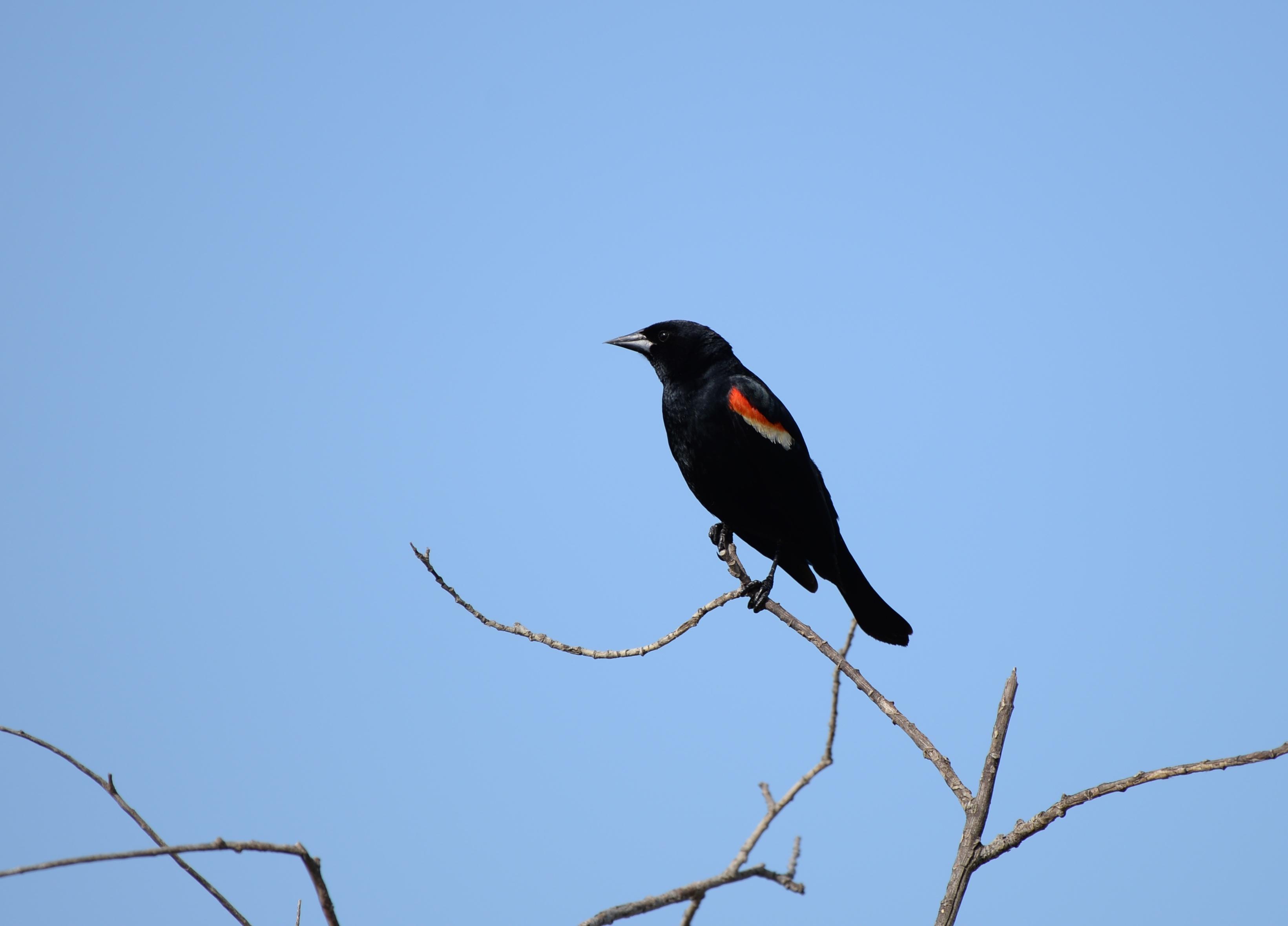 Bulk Bird Food Link Directory - Animal Information
